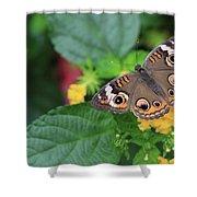 Common Buckeye II Shower Curtain