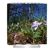 Common Dog-violet Shower Curtain