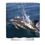 Common Dolphin Delphinus Delphis Shower Curtain