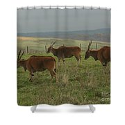 Common Eland 3 Shower Curtain