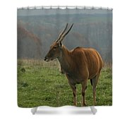 Common Eland Shower Curtain