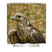 Common Female Kestrel Shower Curtain
