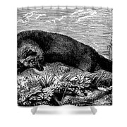 Common Fox Shower Curtain