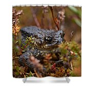 Common Frog Shower Curtain