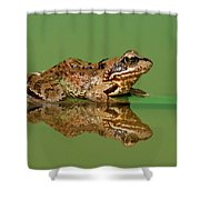 Common Frog Rana Temporaria Shower Curtain