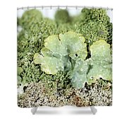 Common Greenshield Lichen Shower Curtain by Ted Kinsman