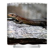 Common Lizard Shower Curtain