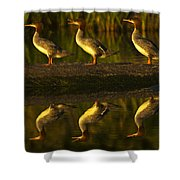 Common Mergansers On Rock Reflecting Shower Curtain