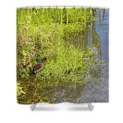 Common Moorhen At The Waters Edge Shower Curtain
