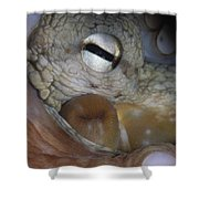 Common Octopus Octopus Vulgaris Close Shower Curtain