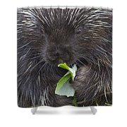 Common Porcupine Erethizon Dorsatum Shower Curtain