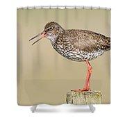 Common Redshank Tringa Totanus Calling Shower Curtain