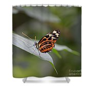 Common Tiger Glassywing Shower Curtain
