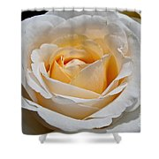 Common Wealth Glory Rose Shower Curtain