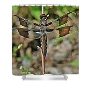 Common Whitetail Dragonfly - Plathemis Lydia - Female Shower Curtain