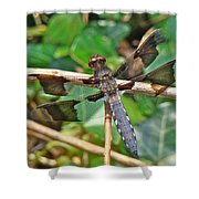 Common Whitetail Dragonfly - Plathemis Lydia - Male Shower Curtain