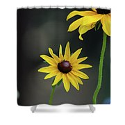Compass Points Shower Curtain