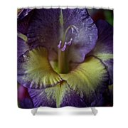 Complimentary Colors Shower Curtain