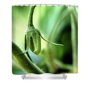 Conception Of A Roma Tomato - On The Vine Square Shower Curtain