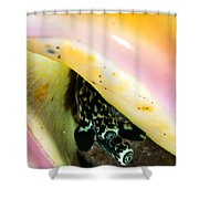Conch Eyes Shower Curtain