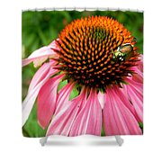 Cone Flower And Guest Shower Curtain