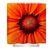 Cone Flower  Shower Curtain