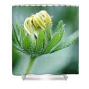 Cone Flower Rubeckia Hirta  Shower Curtain