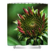 Coneflower Close-up Shower Curtain