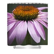 Coneflower Visitor Shower Curtain