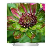 Confused Cone Flower Shower Curtain
