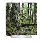 Coniferous Forest, Inside Passage Shower Curtain