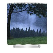 Coniferous Trees Early In The Morning Shower Curtain