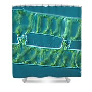 Conjugation In Algae, 2 Of 4 Shower Curtain