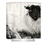 Connemara Sheep Shower Curtain