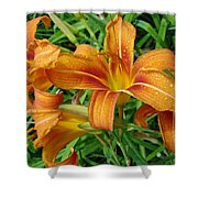 Consider The Lilies Of  The Field - Hemerocallis Fulva Shower Curtain