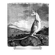 Cook: Kangaroo, 1773 Shower Curtain