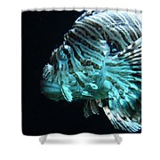 Cool Fish Shower Curtain