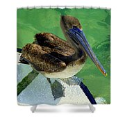 Cool Footed Pelican Shower Curtain
