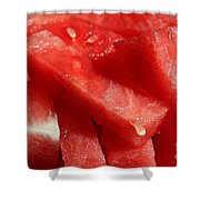 Cool Watermelon Wedges Shower Curtain by Barbara Griffin