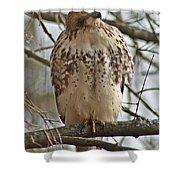 Cooper's Hawk 1 Shower Curtain