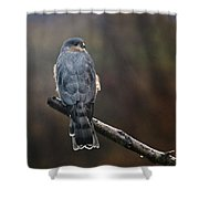 Coopers Hawk Shower Curtain