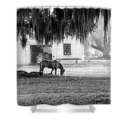 Coosaw - Grazing Free Shower Curtain