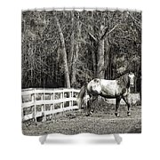 Coosaw - Outside The Fence Black And Wite Shower Curtain