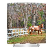 Coosaw - Outside The Fence Shower Curtain