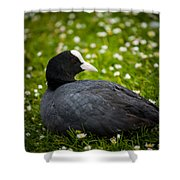 Coot Shower Curtain