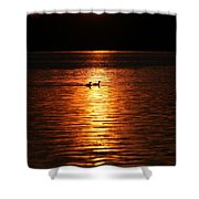 Coots In The Sunset Shower Curtain