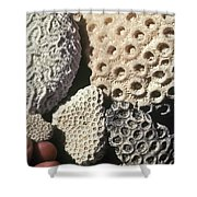 Coral Cobbles On Beach Of Bonaire Shower Curtain