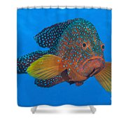 Coral Grouper, Kimbe Bay, Papua New Shower Curtain