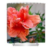 Coral Hibiscus Shower Curtain