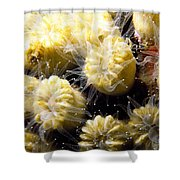 Coral Life 3 Shower Curtain